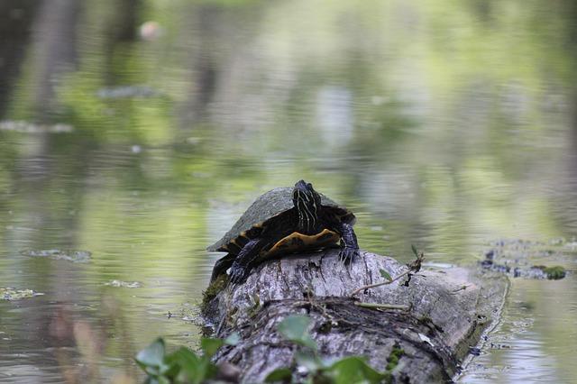 turtle-452651_640