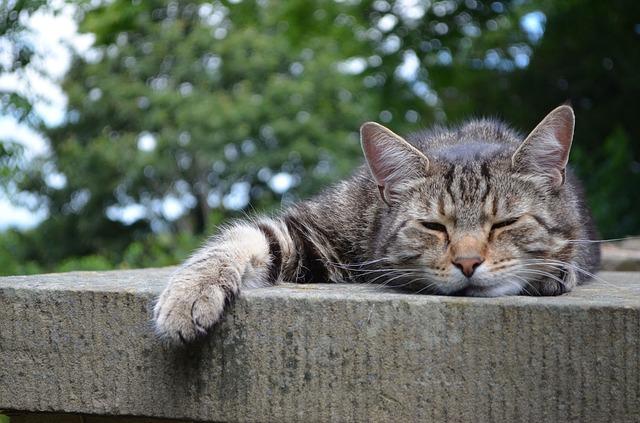 cats-168144_640